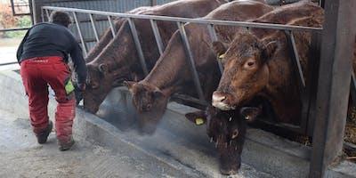 Biochar for soil and livestock health