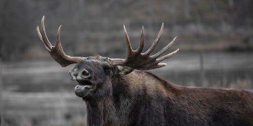 Grigs Elk Hike #3