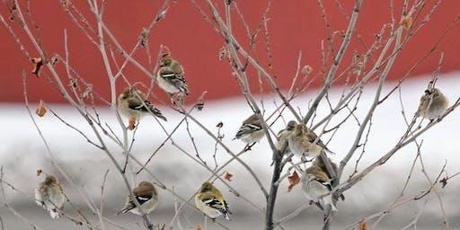 IJAMS BIRD-ABOUTS: Christmas Bird Count
