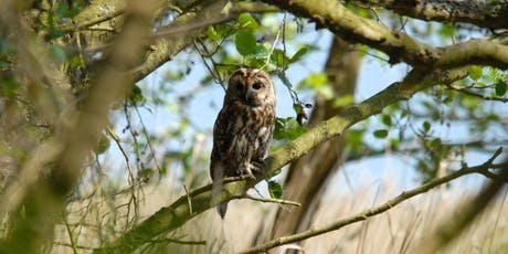 Nocturnal nature at RSPB Minsmere tickets