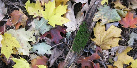 Nature Storytime for Sprouts 2019: Leaf Hunt tickets