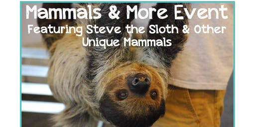 Mammals and More Event - Meet Steve the Sloth & other Unique Mammals