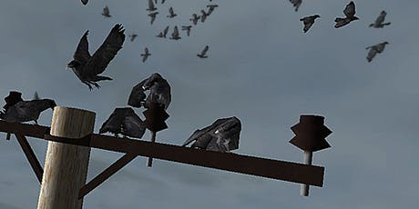 Come and meet up to 12,000 crows! tickets