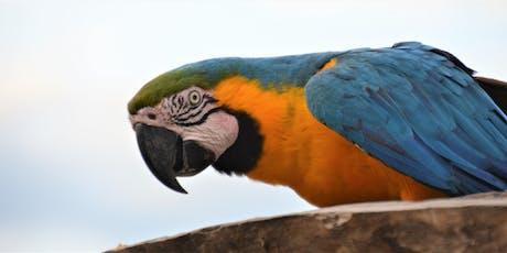 Brazil's Pantanal tickets