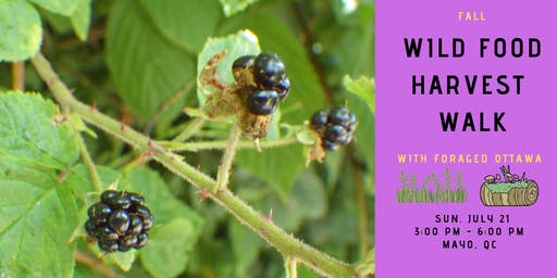 Wild Food Harvest Walk - Mayo, QC