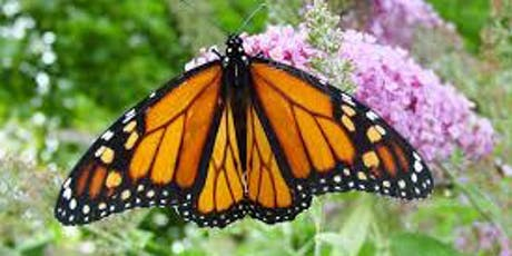 Chrysalis Kids: Monarchs and More! tickets