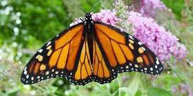 Chrysalis Kids: Monarchs and More!