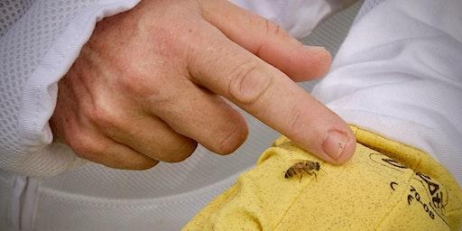 Lazy B Beekeeping Series - LHG Member