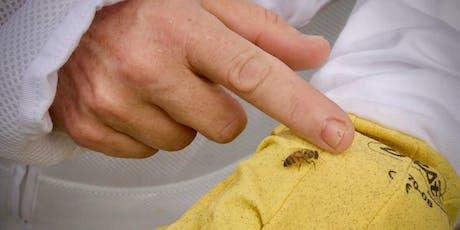 Lazy B Beekeeping Series - $50 deposit tickets