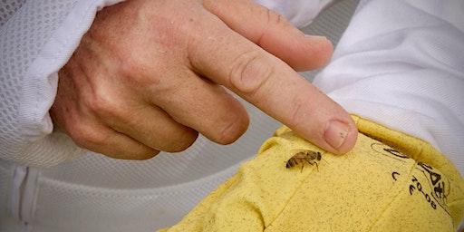 Lazy B Beekeeping Series - $50 deposit