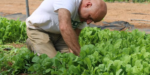 Lettuce Know, Lettuce Grow: Crystal Organic Farm