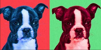 POP ART PET PORTRAITS (drawing & painting) for 5-8 year olds