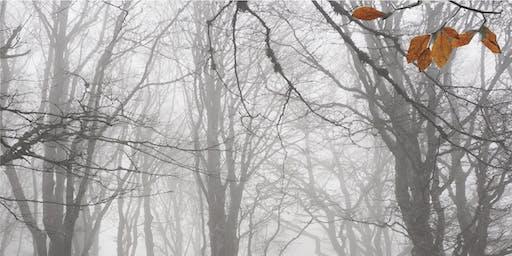 The Beauty of Winter in Orange