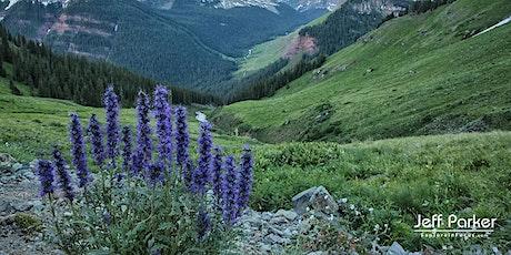 Colorado Wildflowers ~ Photo Tour 2020 tickets
