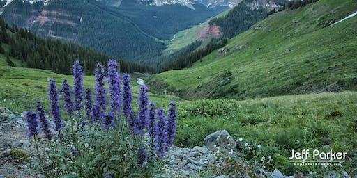 Colorado Wildflowers ~ Photo Tour 2020