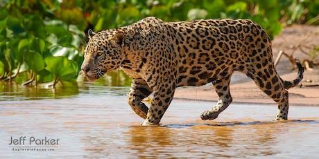 Jaguars of the Pantanal ~ Photo Tour 2021 ingressos