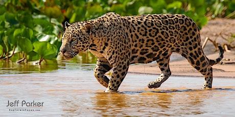 Jaguars of the Pantanal ~ Photo Tour 2021