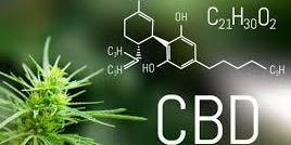 CBD 101 - The Truths and Myths about CBD