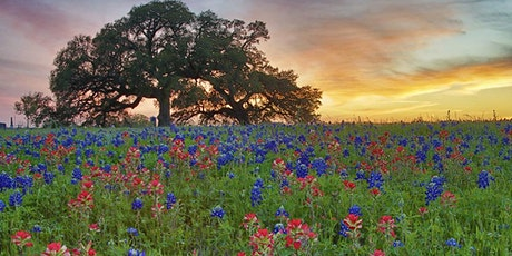 Texas Wildflowers ~ Photography Workshop ~ 2021 tickets