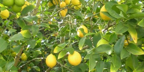 Citrus Tree Pruning 101 tickets