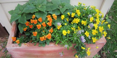 Learn How to Make a Self-Watering Garden