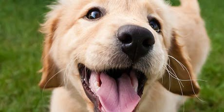 PUPPY MANNERS (LEVEL 1) Sunday, Red Stables, St Anne's Park, Raheny tickets