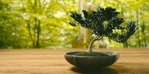 Bon-Chi! Learn and practice the art of Bonsai using edible plants!