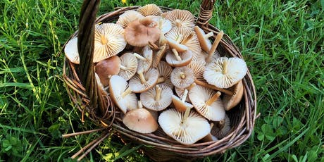 Cambridgeshire, Huntingdon, Autumn Wild Food Foraging Course Walk tickets