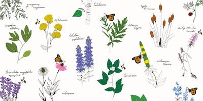 Celebrating Medicinal Plants: Wellness Fair