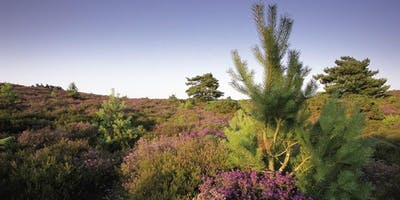 Discover Hydes Heath at RSPB Arne