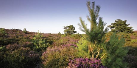 Discover Hydes Heath at RSPB Arne tickets