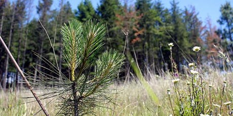 Climate Adaptation Strategies for Pacific Northwest Forests (Salem) tickets