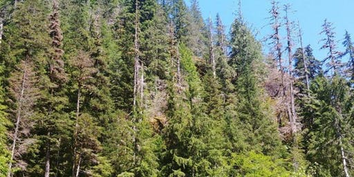 Climate Adaptation Strategies for Pacific Northwest Forests (Everett)