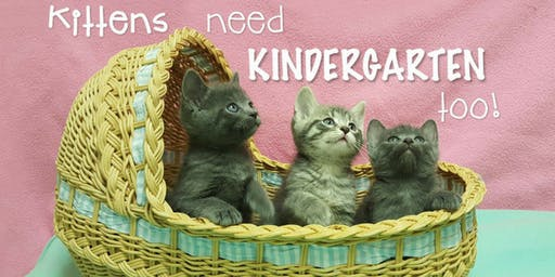 September 2019 Kitten Kindergarten