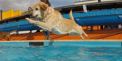 Dog Day Afternoon - Dogs and Their Owners Swim