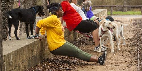 PACK FITNESS - GROUP DOG TRAINING