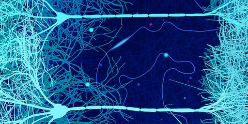 Neural Mechanisms of Memory and Cognition