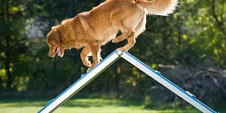 COMPANIONSHIP DOG AGILITY CLASS tickets