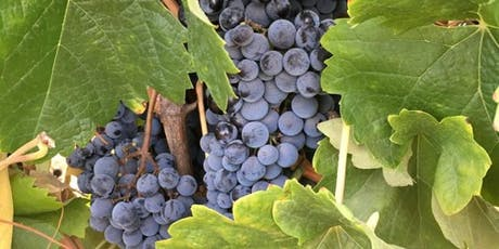 Hill Top Winery September 2019 Pick-Up Party tickets