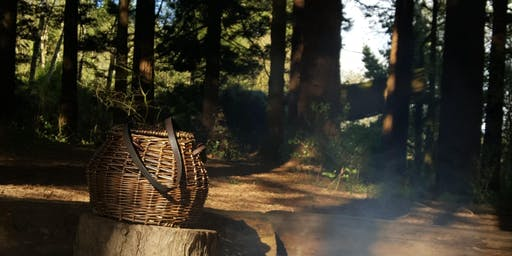 Spring Forest Therapy & Foraging Experience