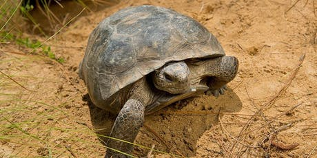 Gopher Tortoise Symposium | GFA Members Only Event tickets