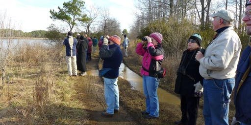 Winter Waterfowl and Refuge Walks at Eastern Neck Island 2019-20