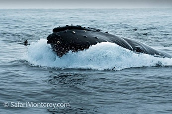 Safari Monterey (03-02-2020 starts at 1:00 PM) tickets