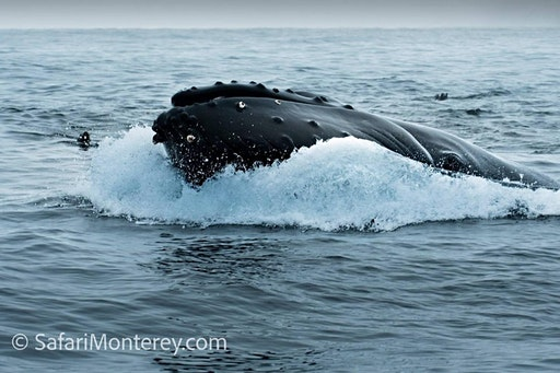 Safari Monterey (01-19-2020 starts at 9:00 AM)