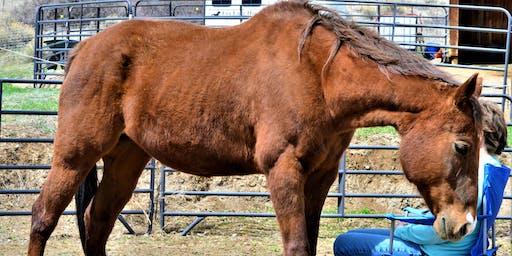 Meditation Circle with Horses