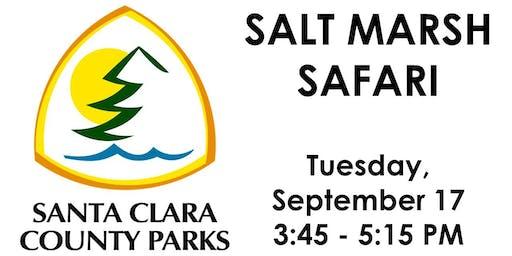Salt Marsh Safari