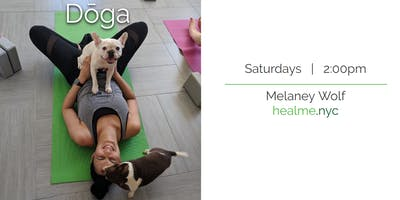 event image Doga NYC (Yoga with your Dog!)