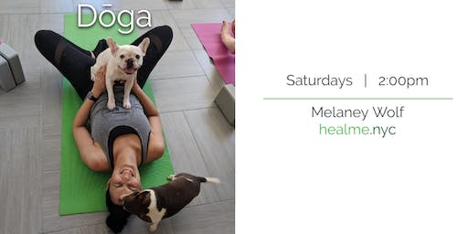Doga NYC (Yoga with your Dog!)