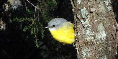 Bush Explorers - 'Spring into Nature' - Spring songsters walk - Noorumba