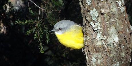 Bush Explorers - 'Spring into Nature' - Spring songsters walk - Noorumba tickets